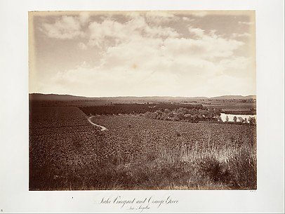 Lake Vineyard and Orange Grove, Los Angeles