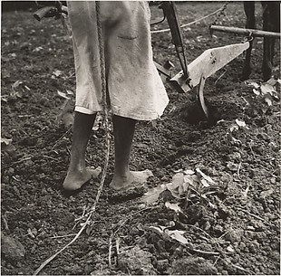 [Young Woman Plowing Field near Eutaw, Alabama]