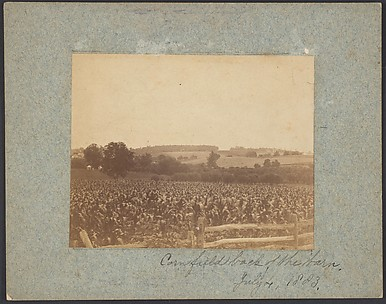 [Cornfield in Back of the Barn]