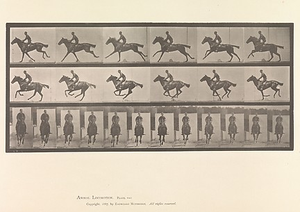 [Horse and Rider Galloping]