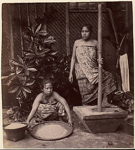 Javanese Women Preparing Rice