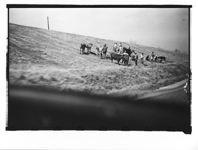[Group of Men with Cattle on Levee, From Moving Automobile, Louisiana]