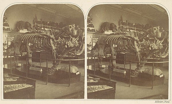 The Megatherium, British Museum