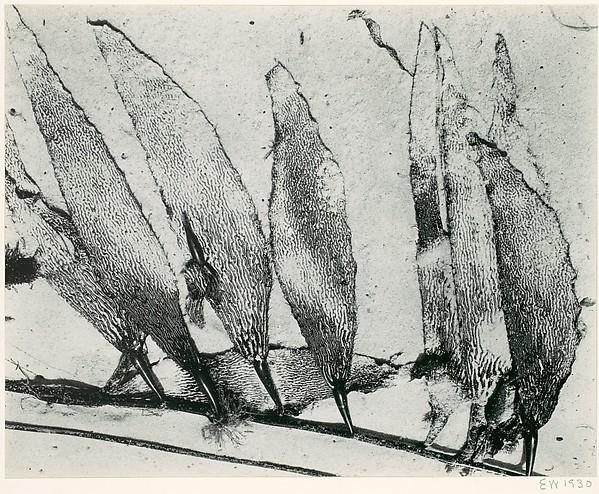 Seaweed, Carmel