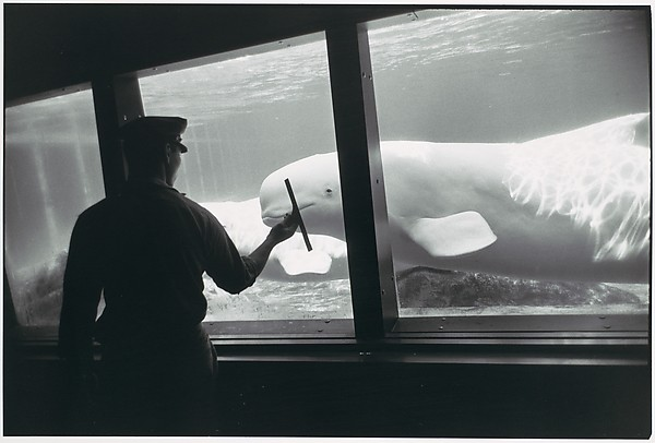 [Whale in Aquarium]