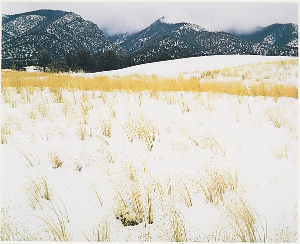 Snow and Grass, Colorado