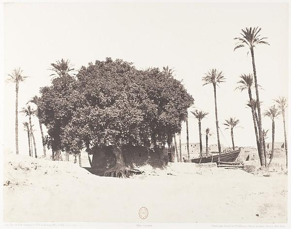 Esneh, Dattiers, Sycomore et Café Sur le Bord du Nil