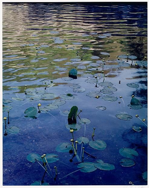 Water Lilies, Rocky Creek, Ozarks, Missouri