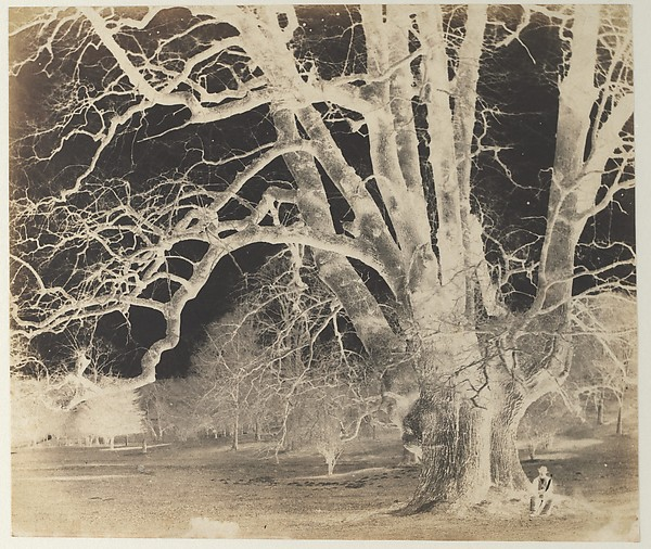 Fascinating Historical Picture of Unknown with [Spreading Oak with Seated Figure] in 1850