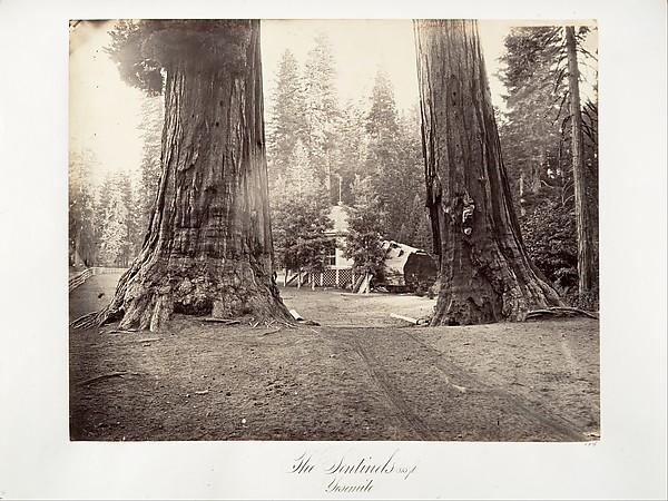 The Sentinels, 315 feet, Yosemite