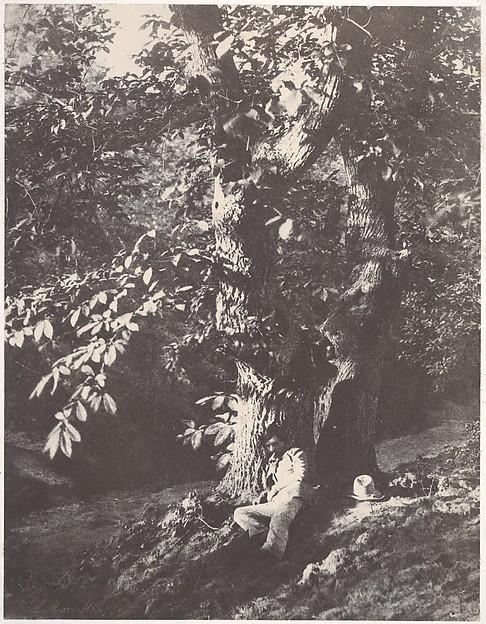 Homme allongé au pied d'un chàtaignier