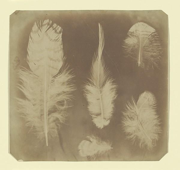 [Chicken Feathers]