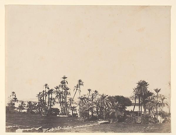 Etude de Palmiers, Bords du Nil, Kalabschi