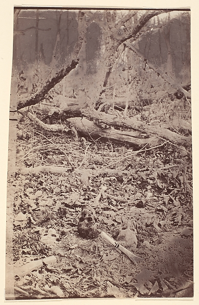 [The Wilderness Battlefield, near Spotsylvania, Virginia]