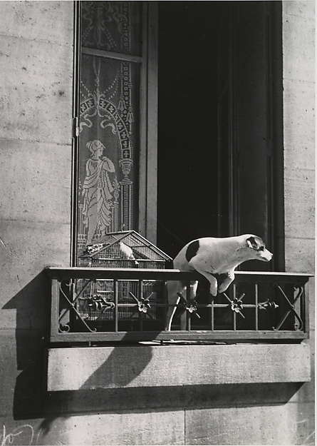 The Concierge's Dog, Paris