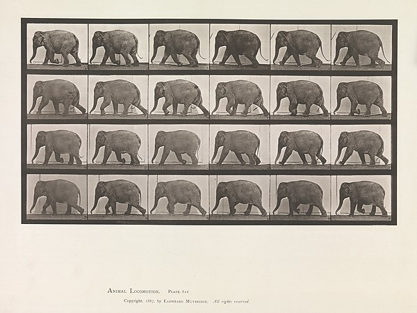 Animal Locomotion.  An Electro-Photographic Investigation of Consecutive Phases of Animal Movements.  Commenced 1872 - Completed 1885.  Volume XI, Wild Animals and Birds