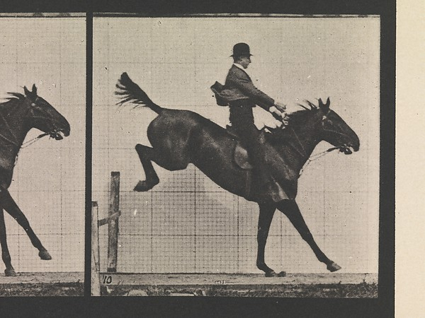 Animal Locomotion.  An Electro-Photographic Investigation of Consecutive Phases of Animal Movements.  Commenced 1872 - Completed 1885.  Volume IX, Horses