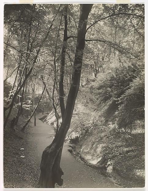 Footpath in the Siebengebirge