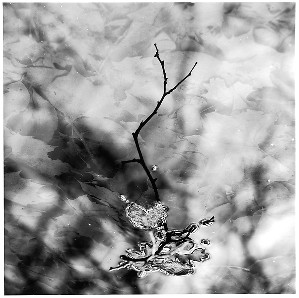 [Twig and Leaves in Water]