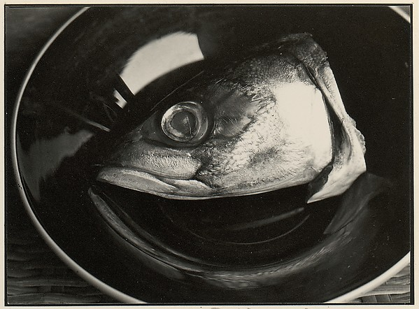 [Fish Head on Plate]
