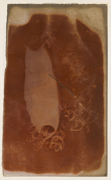 Fascinating Historical Picture of Unknown with [Shark Egg Case] in 1840