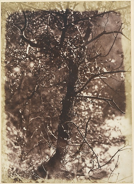 The Fairy Tree at Colinton