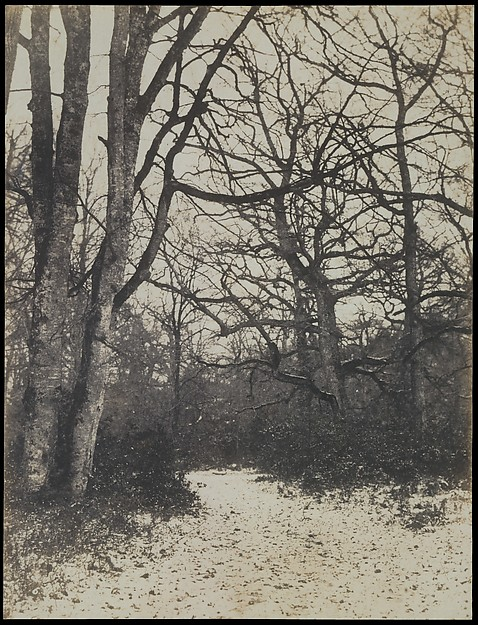 [Fontainebleau Forest]