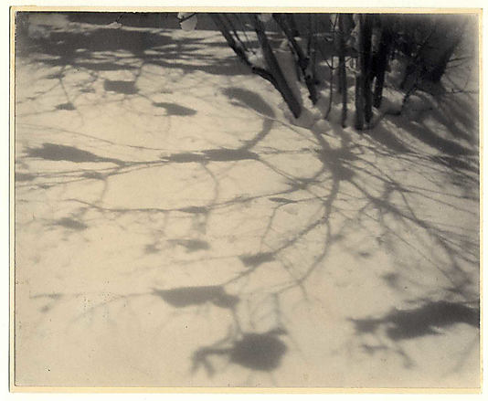 Shadows in the Snow, Central Park, New York City