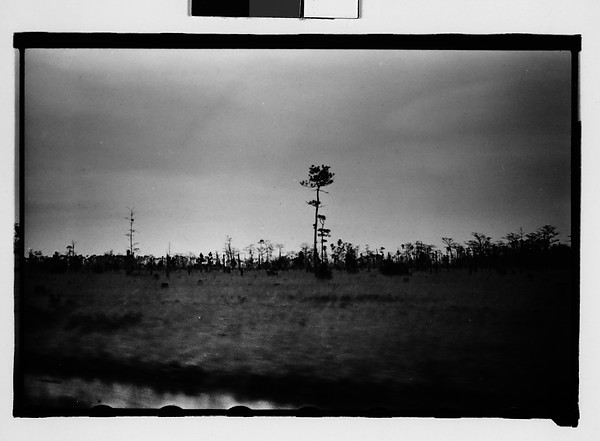 [Trees in Field, From Moving Car, Between Mobile and New Orleans]