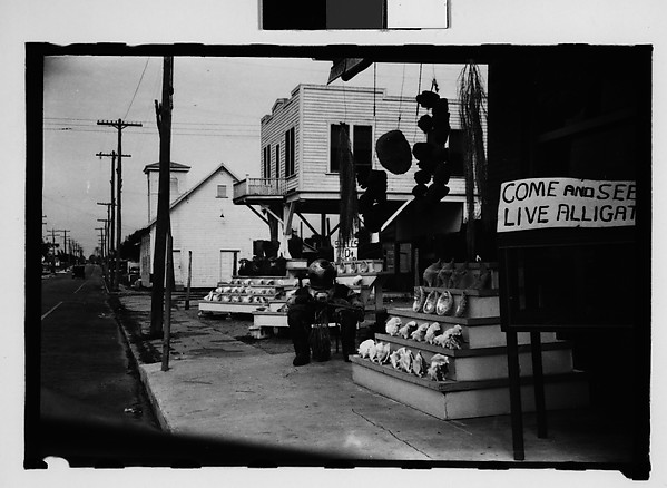 [Five 35mm Film Frames on Uncut Roll of Roadside Stand Selling Shells and Advertising Live Alligators, Tarpon Springs, Florida]