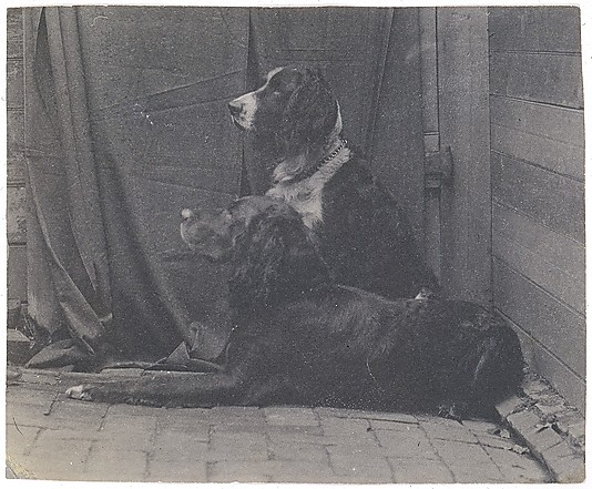 [Thomas Eakins's Dog Harry and Another Setter]