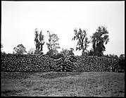 [Logging Landscape, Florida]