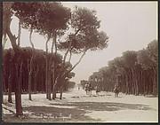 Promenade des Pins á Beyrouth