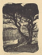 Cypress, Pebble Beach, California
