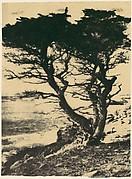Cypress at Pebble Beach, California