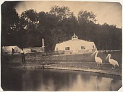 [The Pelicans and Greenhouses, Zoological Gardens, Brussels]