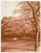 [Cherry Tree with House in Background]