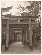 [Row of Torii Gates at Unidentified Shinto Shrine]