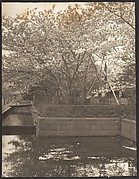 [Garden with Cherry Trees in Bloom, Pool]