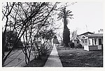 Street Scene, Trees & Houses, Hollywood, California