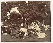 [Scene in Camp]
