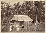 Tropical Scenery, Native Hut, Turbo