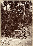 Tropical Scenery, The Brook El Bano, Chipigana