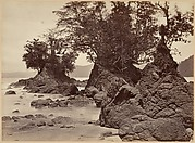 Tropical Scenery, Limon Bay - Low Tide