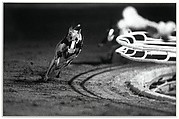 3 White (DG's Mr. Postman) Fourth Race, Phoenix Greyhound Park, Phoenix, Arizona, August 22, 1994