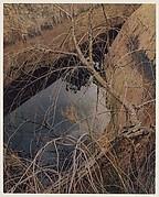 Dead Tree and Pool, Waterpocket Fold, Glen Canyon, Utah