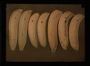 [Bananas]