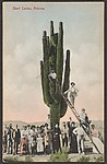 Giant Cactus, Arizona