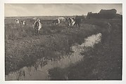 Cattle on the Marshes