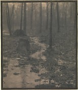 Woods Interior